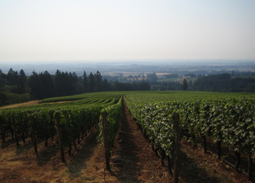 Vineyard Willamette