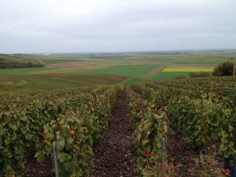 View of the valley on the side of Broyes opposite of Yves Jacopé. Beauty and vines everywhere you look!