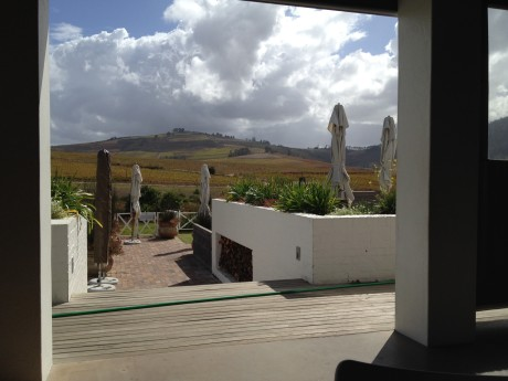 My lunchtime view over the vineyards from the veranda at Mulderbosch