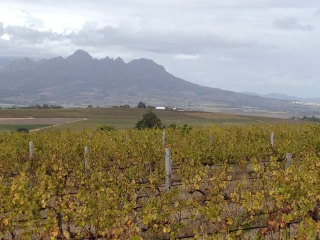 The view from Reyneke wines at Uitzicht Farm